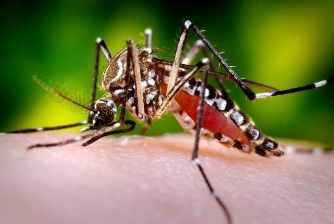 campanha-combate-dengue-2